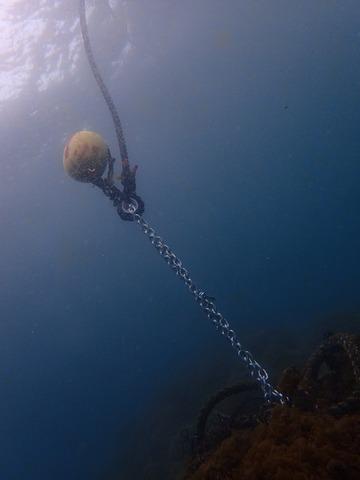 淡島のブイとライン