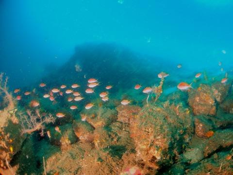 淡島のサクラダイ