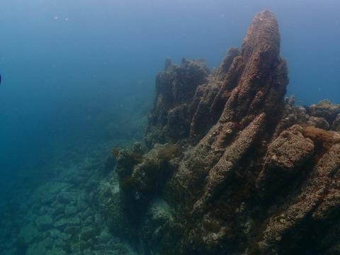 淡島海底 (1)