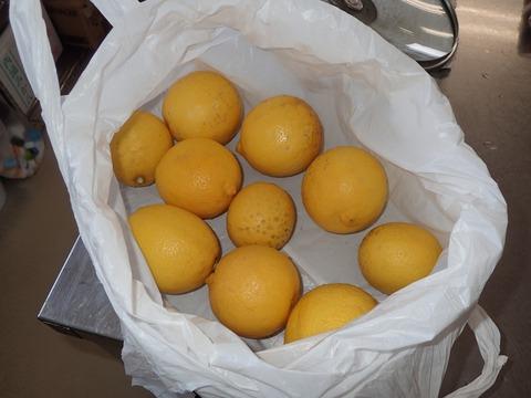 大川家のレモン