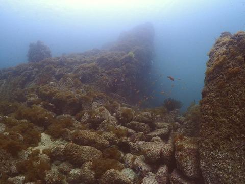 淡島海底 (2)