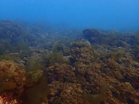 海藻急に増えだしたー