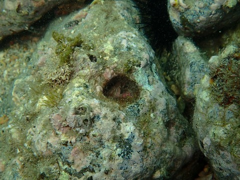 岩に穴っぽこ