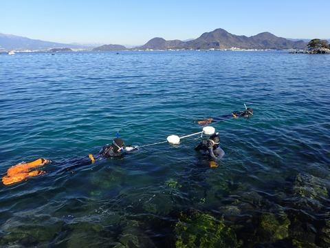 海洋生物リサーチ隊@平沢ビーチ (2)