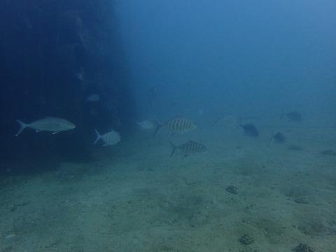 1128土管魚礁