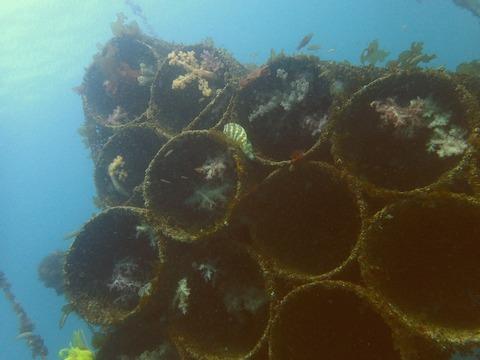 平沢ビーチ土管魚礁