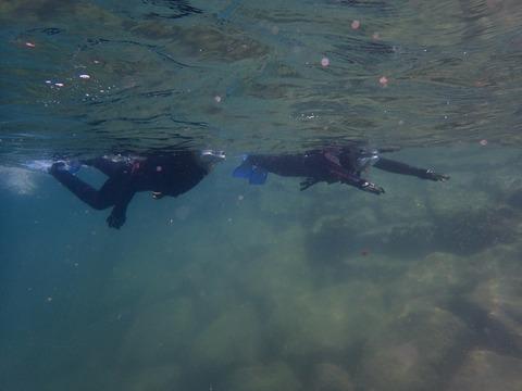 スーイスイッと泳げるように (2)