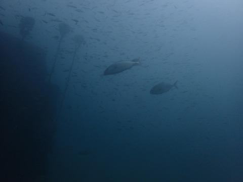 1031パイプ魚礁