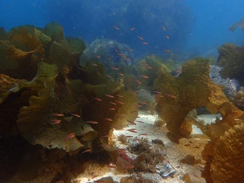 チャガラの幼魚たち