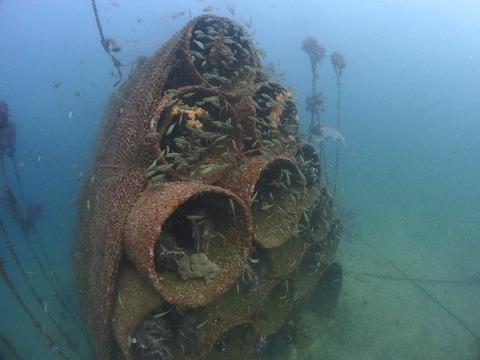 土管魚礁はイサキでいっぱい@平沢ビーチ
