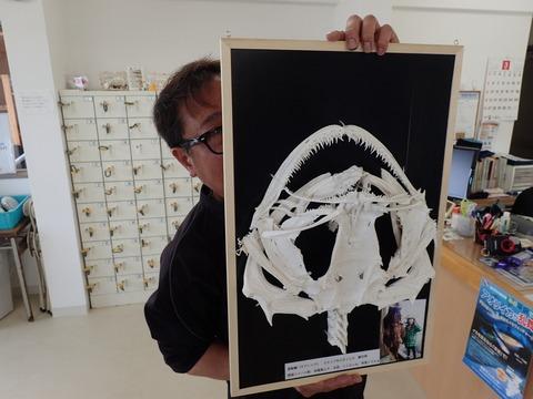 スガさん自作アンコウの骨格標本