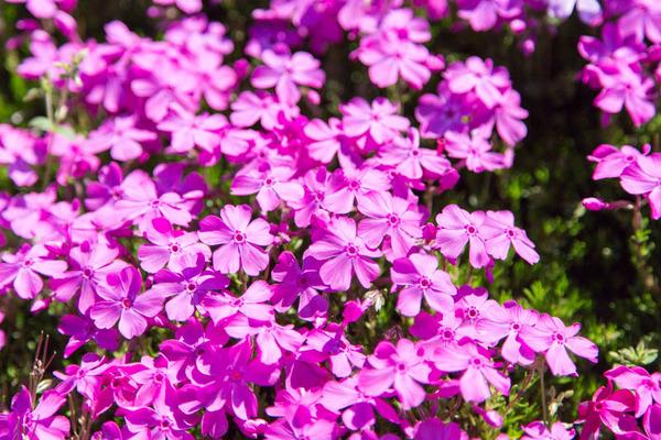 紫峰霊苑-17042333