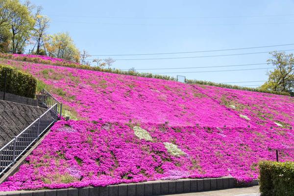 紫峰霊苑11-1704231
