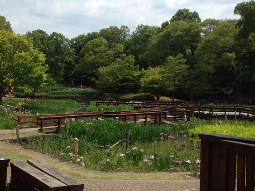 花菖蒲園2