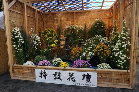 菊花展131105-21