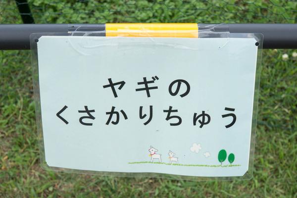 ヤギ-1607075
