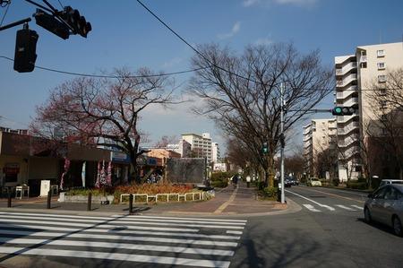 桜130319_01