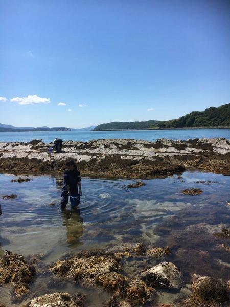 加太の磯生物調査