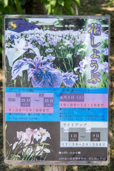 花しょうぶ園-1905255