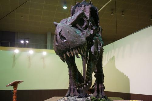 ひらパー恐竜大冒険-35