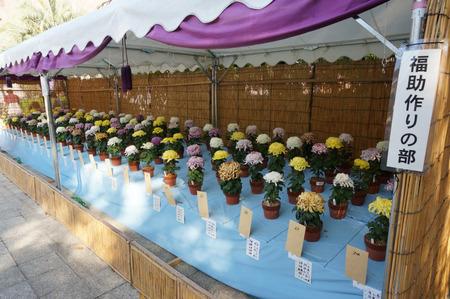 菊花展131105-27