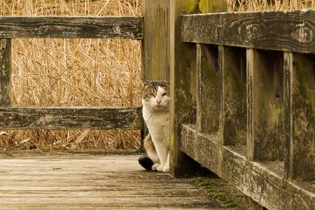 地蔵池の猫140204-01