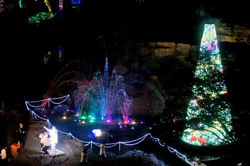 ひらかたパーク光の遊園地-15111171