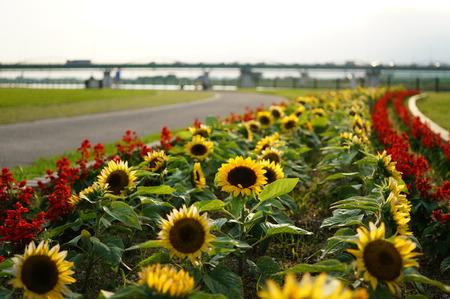 淀川河川公園130701-01