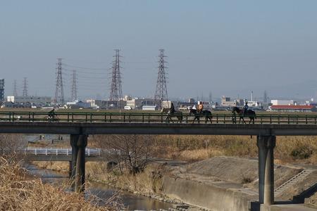 天野川に馬130131_05