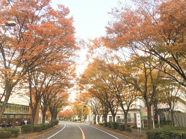 香里ヶ丘(秋)