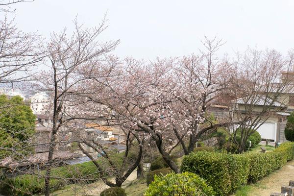 桜-1903292
