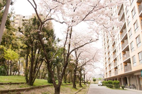 20150403くずは桜-7