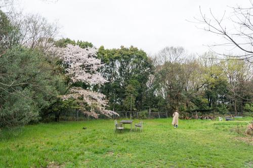 桜花祭2015-53