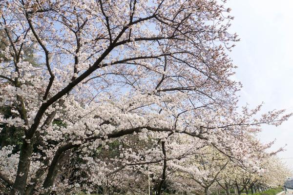車塚公園-1803263
