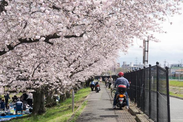 船橋川緑地-1604022
