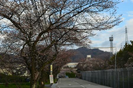 大阪府警察学校付近130328_02