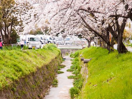 倉治桜堤-1404052
