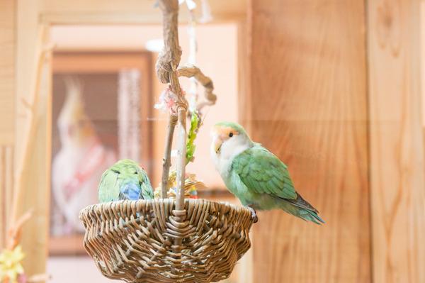 1木と小鳥カフェ-178
