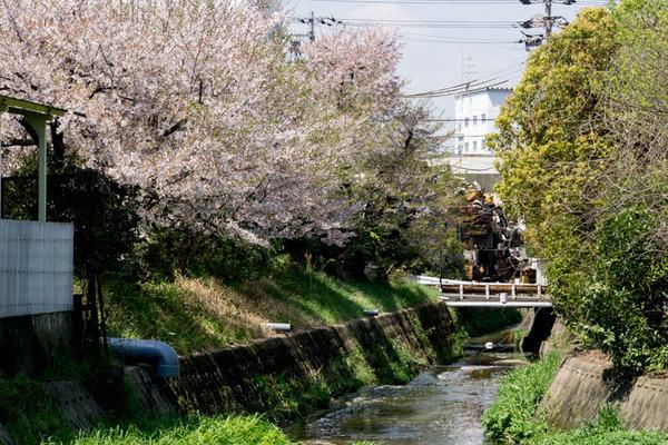 桜-1704131