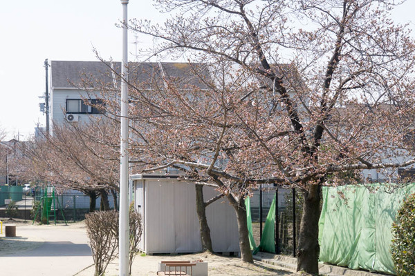 桜-1704031