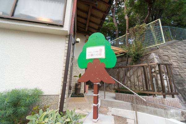 ひまわり畑-151124189