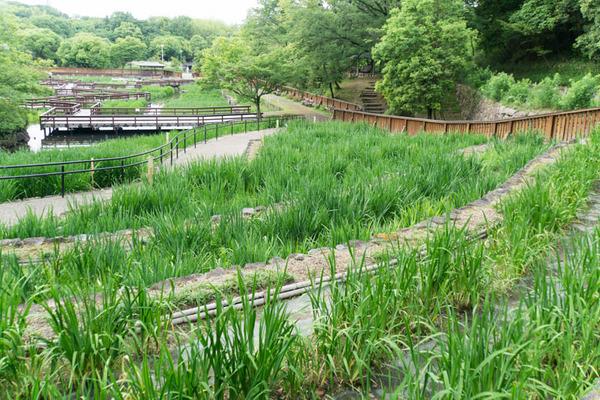 山田池公園-17052518