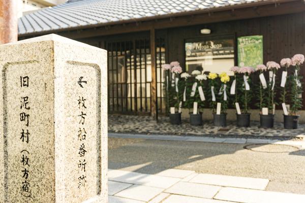 枚方宿街道菊花祭-11