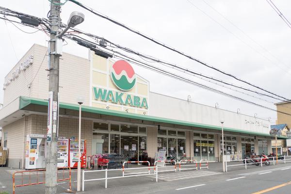 ワカバ-16030702