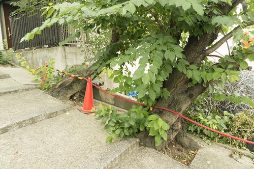 百済王神社の桜-20