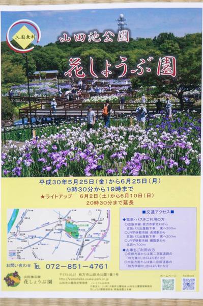 花しょうぶ-18060236