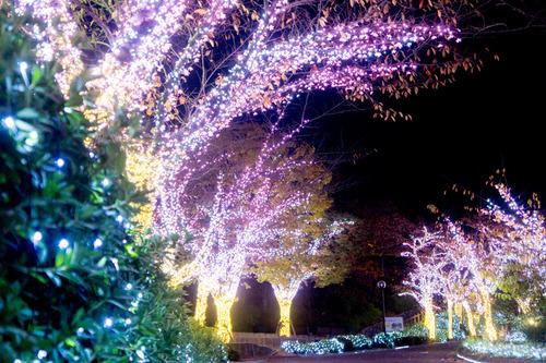 ひらかたパーク光の遊園地-15111151