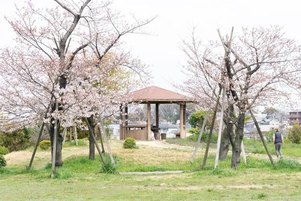 桜-1704061