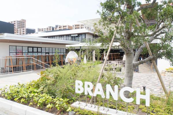 ブランチ-1905061
