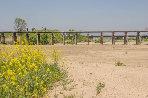 流れ橋-14042412